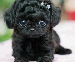 adorable, tiny, and black image