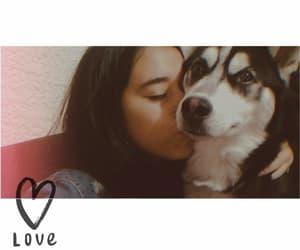 best friend, husky siberiano, and dog image