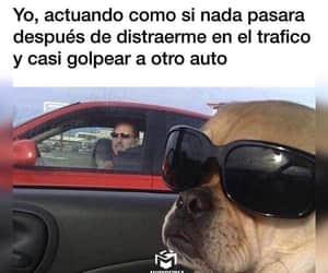 car, dog, and drive image