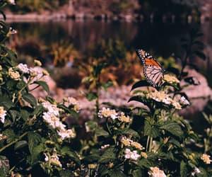borboleta, butterfly, and dEUS image