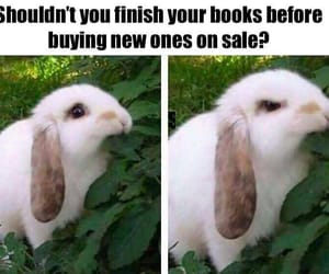books, tumblr, and funny image