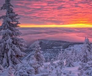 neve, por do sol, and pinheiro image