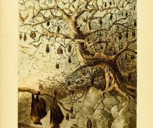 natural history, illustrations, and madagascar image