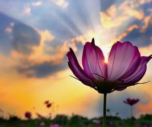 ceu, flor, and flower image