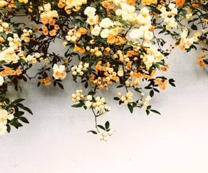 flowers, yellow, and beautiful image