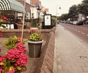 beauty, flowers, and netherlands image