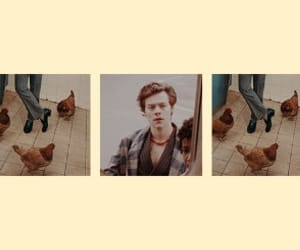 header, headers, and Harry Styles image