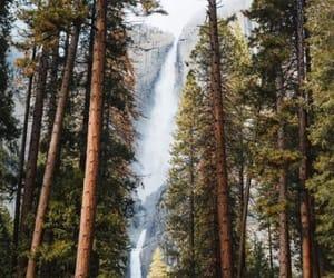 arboles, naturaleza, and bosque image