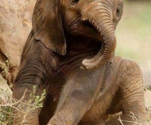 Animales, baby, and elefante image