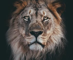 animals, beautiful, and fierce image
