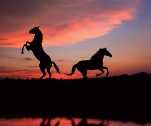 horse, sunset, and animal image