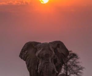 beautiful, elephant, and nature image