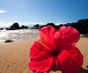 hibiscus, beach, and ocean image