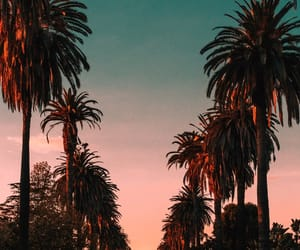 palm trees, wallpaper, and sunset image