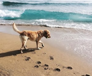 dog, ocean, and sea image