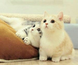 cats and cute image