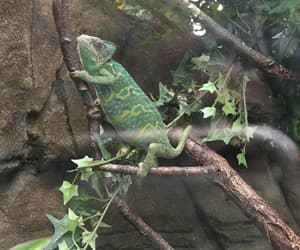 chameleon, nature, and green image