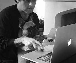 bands, dogs, and billiejoearmstrong image