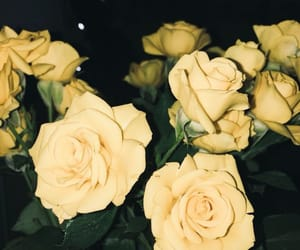 flowers, rose, and love image