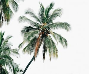 trees, palm trees, and wallpaper image