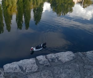 Bosnia, july, and nature image