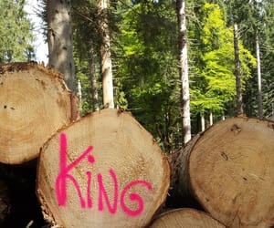 forest, king, and log image