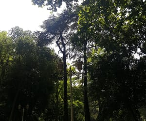 forest, green, and heart image