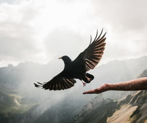 fly, free, and mountains image