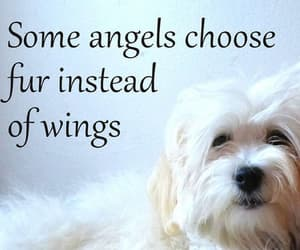 Angel Wings, animals, and baby image