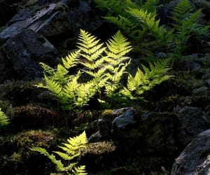 dark, fern, and forest image