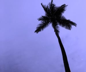 palmera, three, and violeta image
