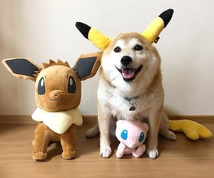 inu, eve, and pokemon image