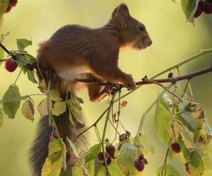 Animales, ardilla, and bosque image