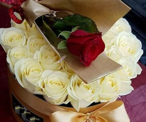 roses gif image