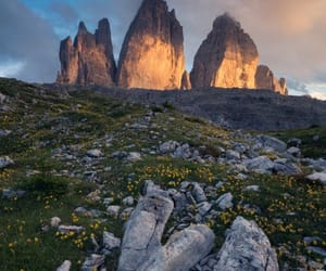 flowers, rocks, and mountains image