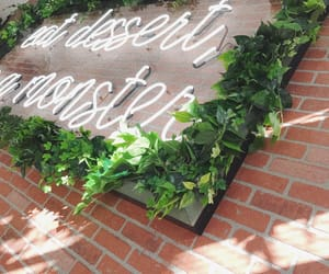 boba tea, plants, and succulent image