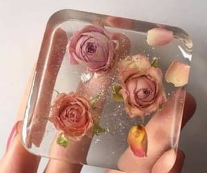 rose and transparent image