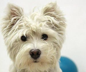 animals, terriers, and dogs image