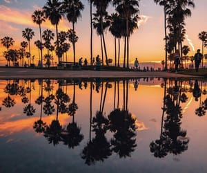 california, palm trees, and nature image