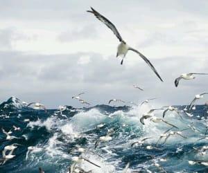 bird, sea, and waves image