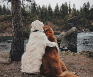 dog, nature, and cute image