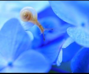 Animales, naturaleza, and caracol image
