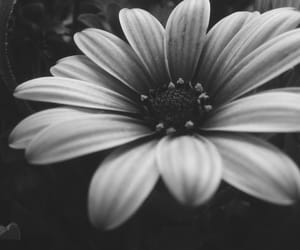 black&white and flower image