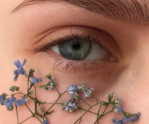 eyes, flowers, and eye image