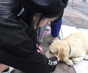 doggie, street, and new friend image