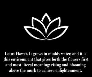 lotus flower, tattoo idea, and symbol image