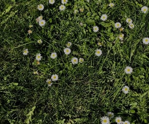 flowers, grass, and green image