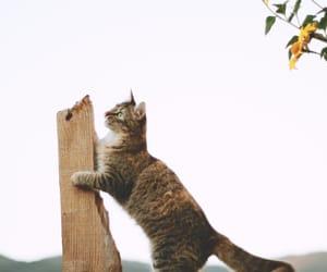 cat, landscape, and neko image