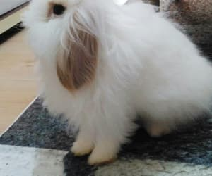 animal, beautiful, and bunny image