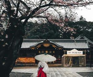 japan, beauty, and sakura image